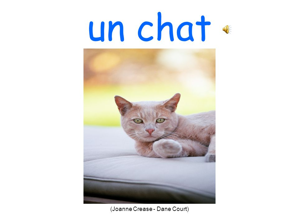 (Joanne Crease - Dane Court) un chien