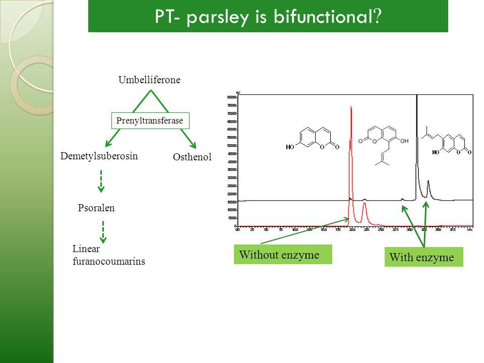 Umbelliferone Demetylsuberosin Osthenol Prenyltransferase Without enzyme With enzyme Linear furanocoumarins Psoralen PT- parsley is bifunctional ?