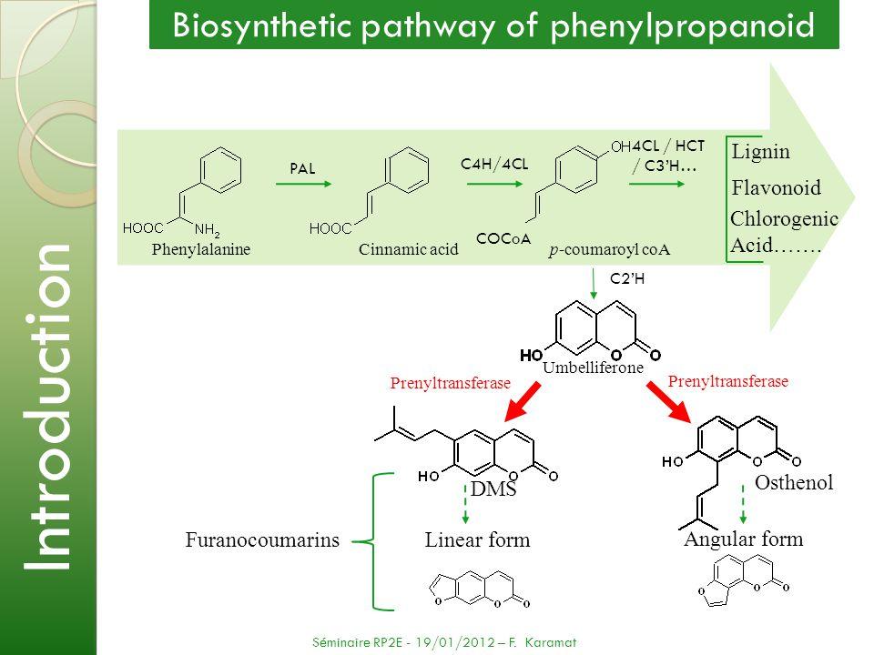 PhenylalanineCinnamic acidp-coumaroyl coA Lignin Flavonoid Linear form PAL C4H/4CL 4CL / HCT / C3H… C2H Angular form Umbelliferone COCoA Furanocoumari
