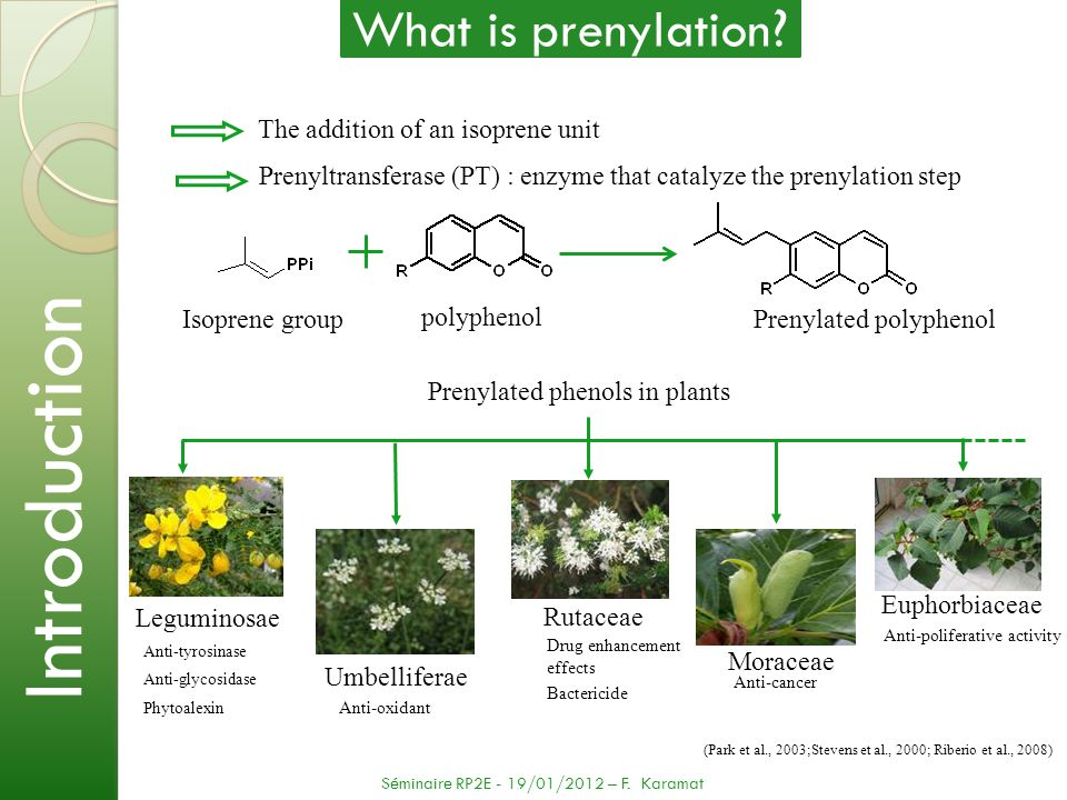 In this work we developed another way to screen the activity of PT enzymes using a plant transient expression system (previously it was done in yeast) We showed a potential way to regulate the production of furanocoumarins in plants thanks to the negative feedback of psoralen Umbelliferone Demetylsuberosin Osthenol Linear furanocoumarins Angular furanocoumarins Psoralen Angelicin Prenyltransferase Conclusion and perspective Conclusions Séminaire RP2E - 19/01/2012 – F.