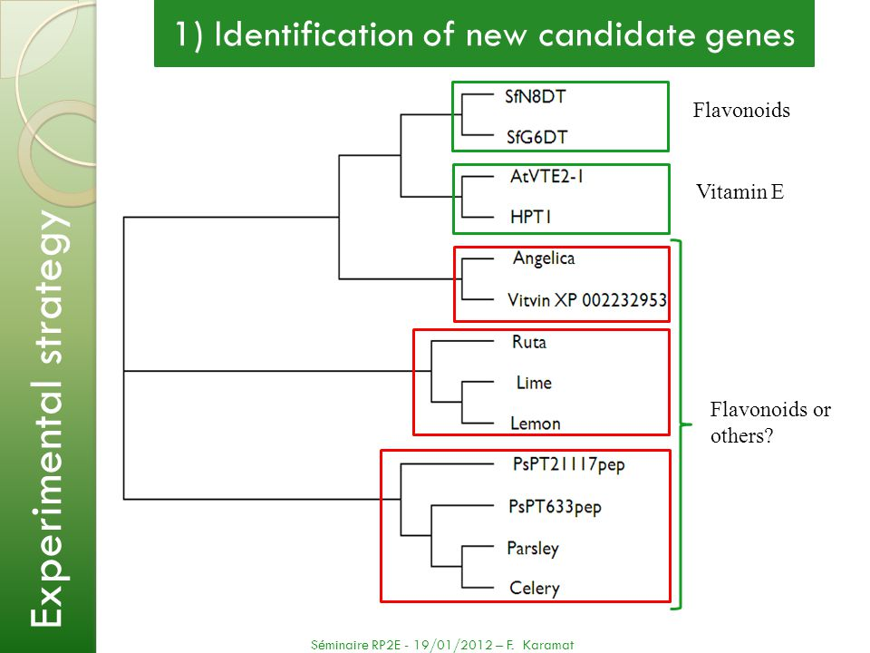 1) Identification of new candidate genes Experimental strategy Séminaire RP2E - 19/01/2012 – F. Karamat Flavonoids Vitamin E Flavonoids or others?