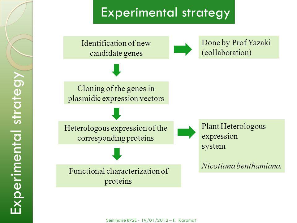 N-Term ORF Promotor 2) Heterologous expression system The principle of the approach (Voinnet et al., 2003; Kapila et al., 1997) Séminaire RP2E - 19/01/2012 – F.