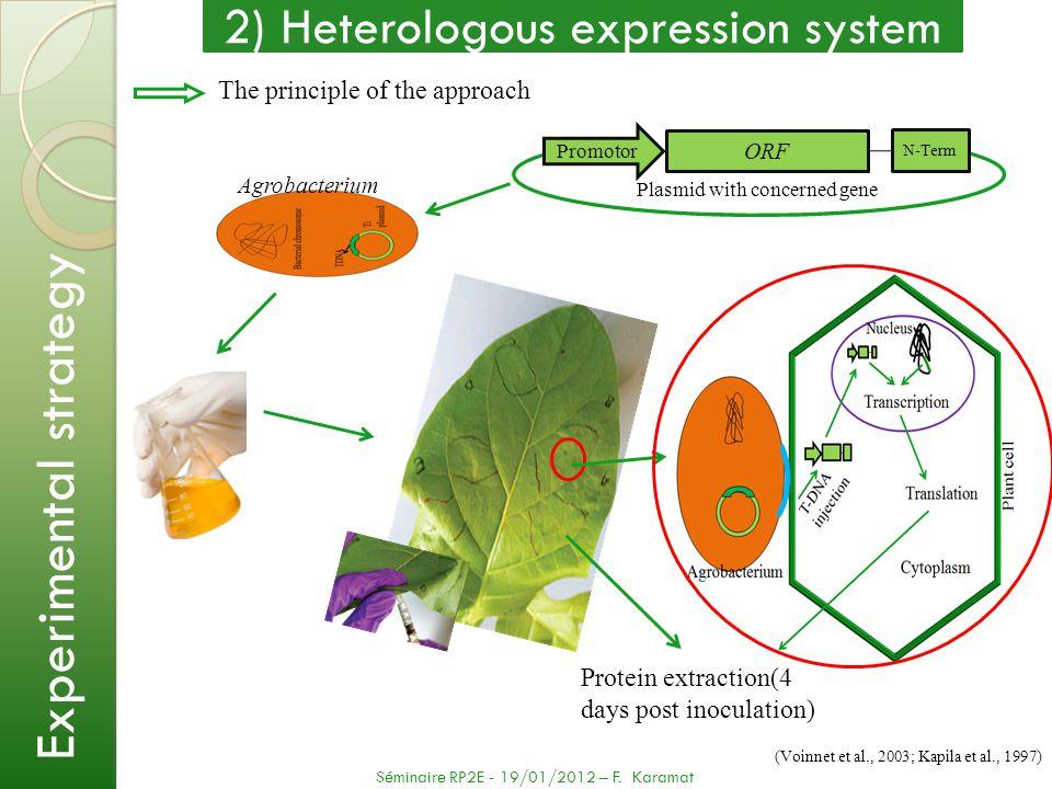 N-Term ORF Promotor 2) Heterologous expression system The principle of the approach (Voinnet et al., 2003; Kapila et al., 1997) Séminaire RP2E - 19/01