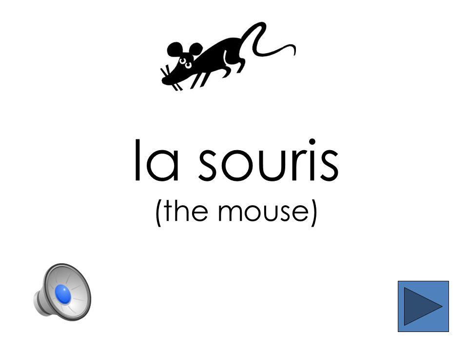 la mouche (the fly)