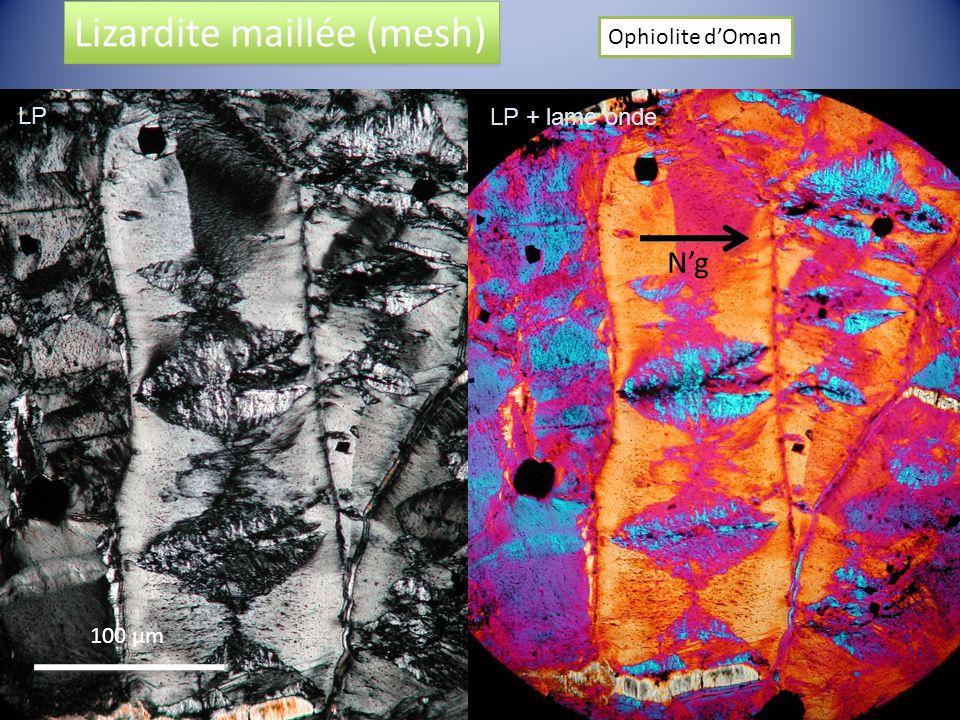 Lizardite maillée (mesh) Ophiolite dOman Ng 100 µm LP LP + lame onde