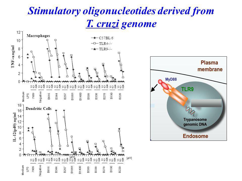 Stimulatory oligonucleotides derived from T.