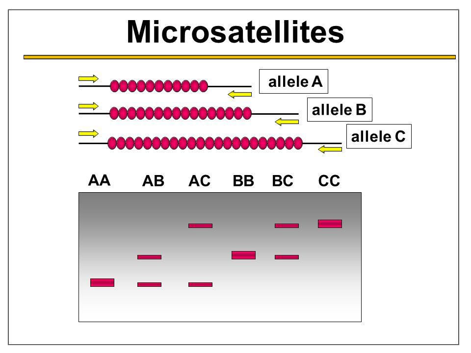 Microsatellites allele A allele B allele C AA ABACBBBCCC