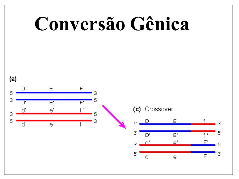 Conversão Gênica