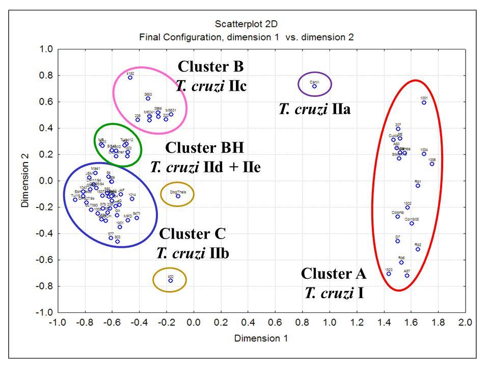 Cluster A T. cruzi I Cluster C T. cruzi IIb Cluster B T.