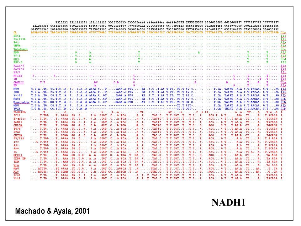 Machado & Ayala, 2001 NADH1
