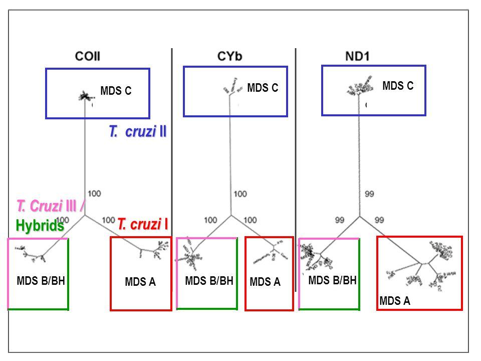 MDS A T. cruzi I MDS C T. cruzi II MDS B/BH T. Cruzi III / Hybrids