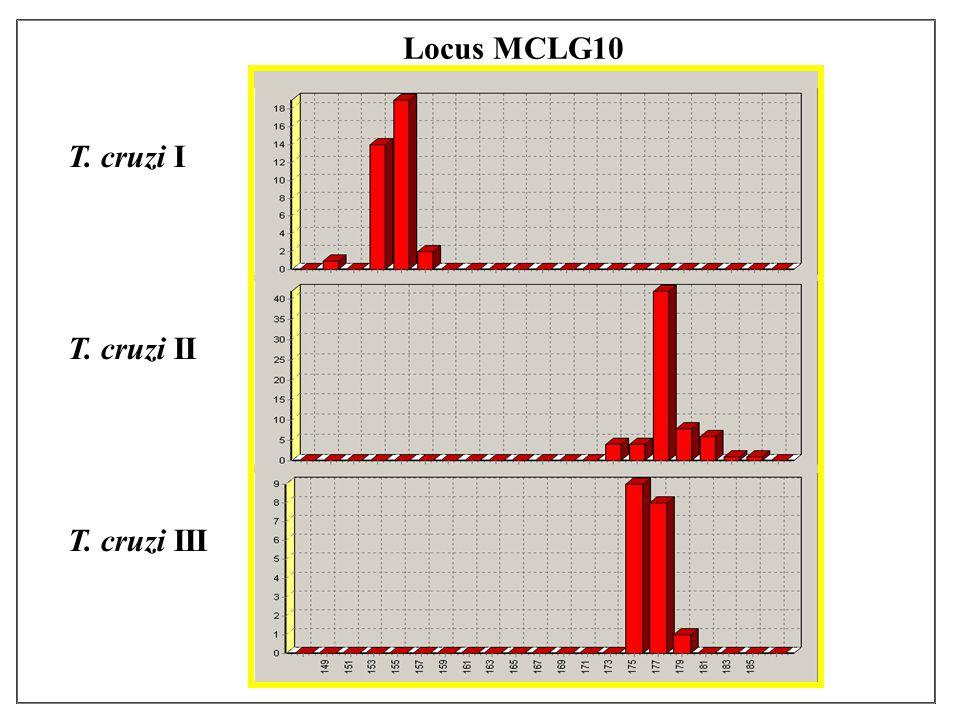 T. cruzi I T. cruzi II T. cruzi III Locus MCLG10