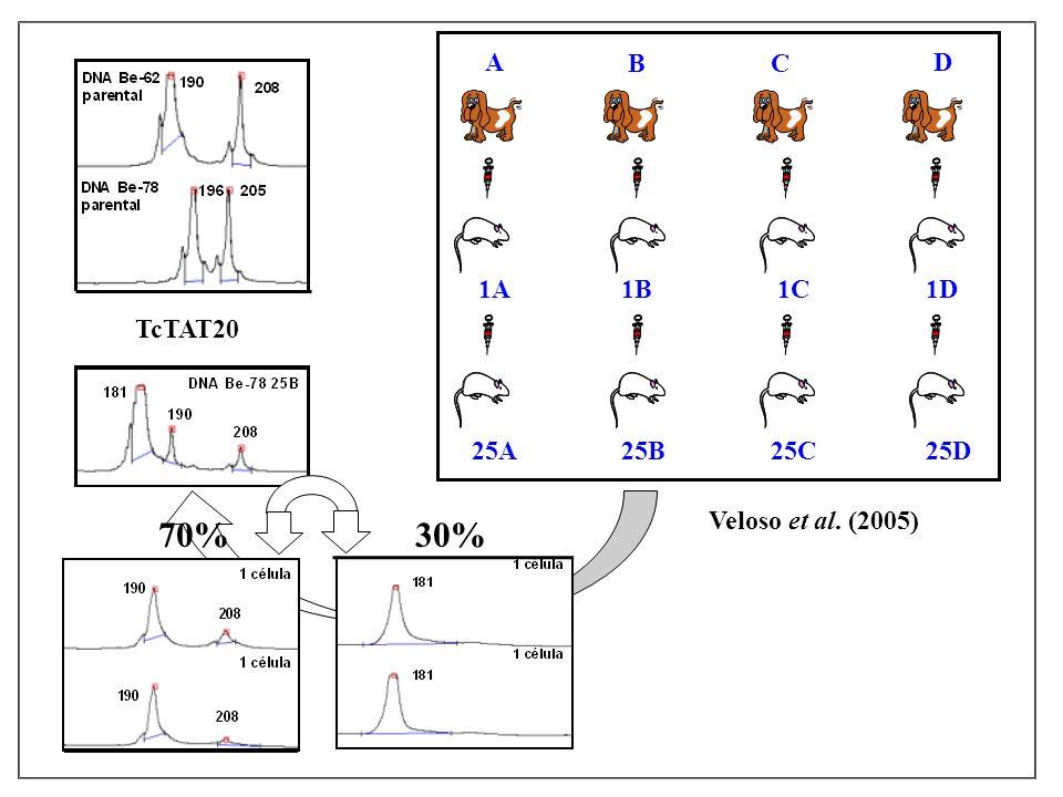 A BC D 1A1B1C1D 25A25B 25C 25D Veloso et al. (2005) TcTAT20 70% 30%