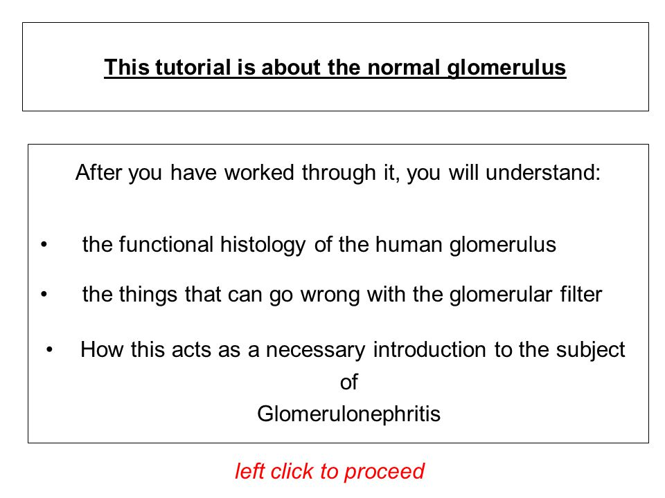 After you have worked through it, you will understand: This tutorial is about the normal glomerulus left click to proceed the functional histology of the human glomerulus the things that can go wrong with the glomerular filter How this acts as a necessary introduction to the subject of Glomerulonephritis