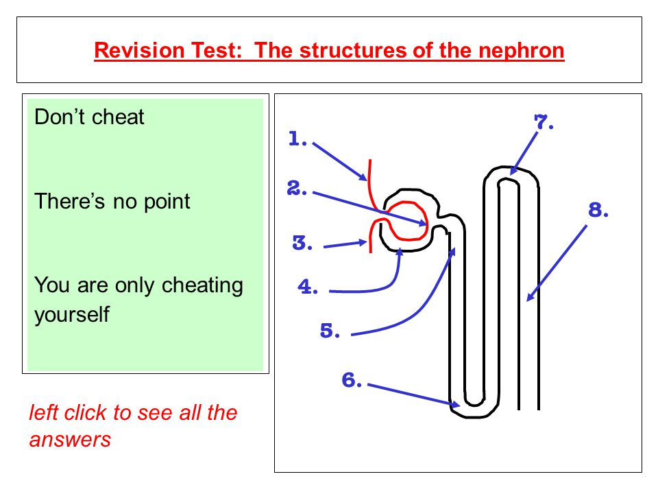 Revision Test: The structures of the nephron 1. 2.