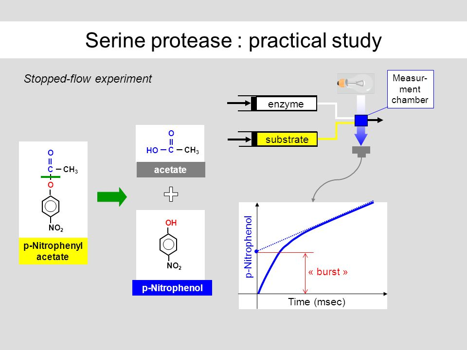 Serine protease : practical study Stopped-flow experiment enzyme substrate Measur- ment chamber Time (msec) p-Nitrophenol « burst » p-Nitrophenyl acet