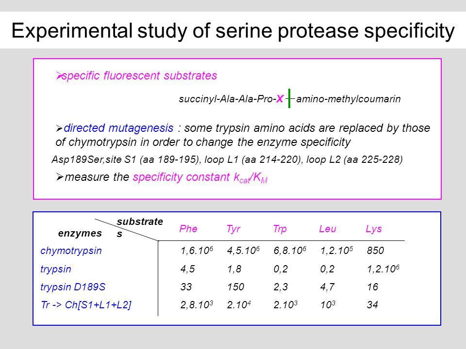 Experimental study of serine protease specificity succinyl-Ala-Ala-Pro-X amino-methylcoumarin specific fluorescent substrates chymotrypsin1,6.10 6 4,5