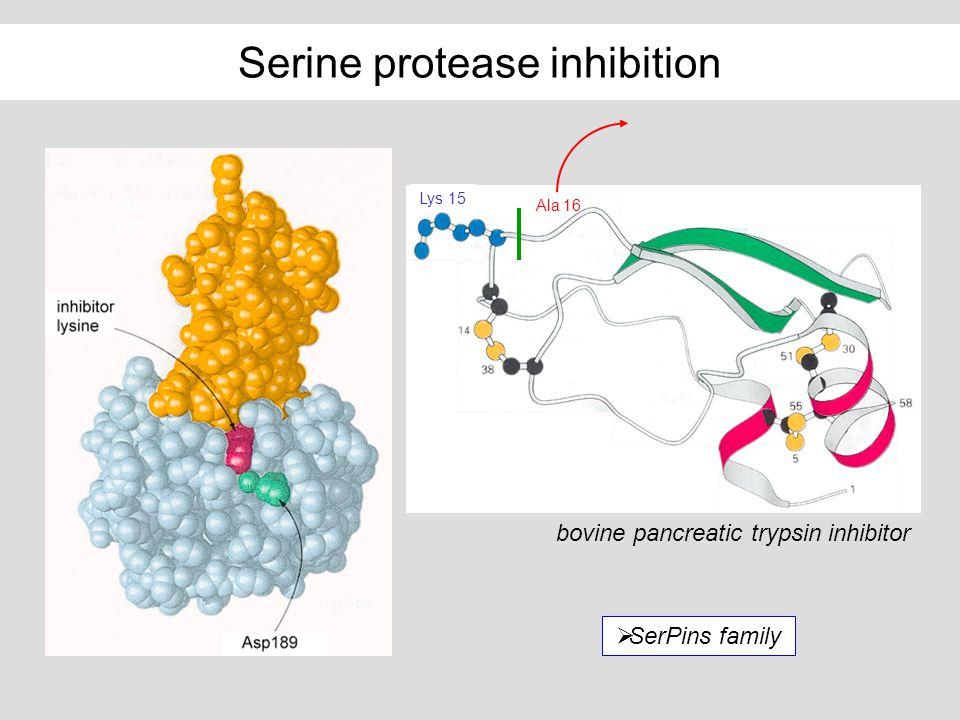 Serine protease inhibition Ala 16 Lys 15 bovine pancreatic trypsin inhibitor SerPins family