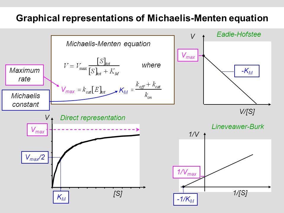 The significance of Michaelis-Menten parameters Catalytic constant or turnover k cat : number of substrate molecules processed per enzyme molecule and per second Michaelis constant K M : substrate concentration at which half of the enzymes bind a substrate molecule (and V = V max /2) The specificity constant k cat /K M determines the specificity for competing substrates k cat /K M < k on < k diffusion 5.10 8 M -1.s -1 V = [E] [S] k cat /K M For two competing substrates