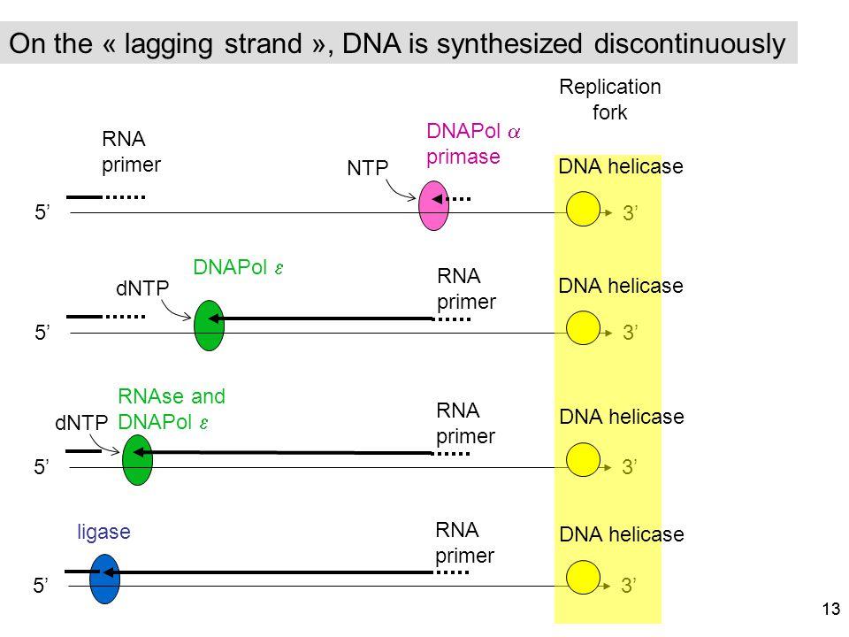 13 5 3 RNA primer dNTP RNA primer 5 3 NTP DNAPol primase 5 3 dNTP RNA primer ligase 5 3 RNA primer RNAse and DNAPol Replication fork DNAPol DNA helica