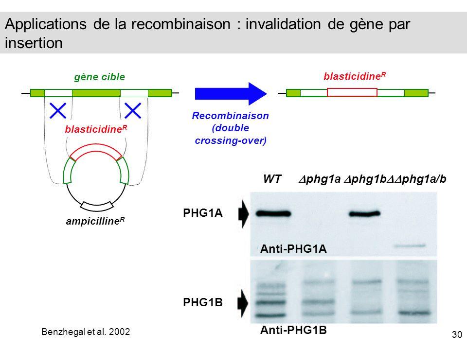 ampicilline R blasticidine R gène cible blasticidine R Recombinaison (double crossing-over) WT PHG1A phg1a phg1b phg1a/b PHG1B Anti-PHG1B Anti-PHG1A B