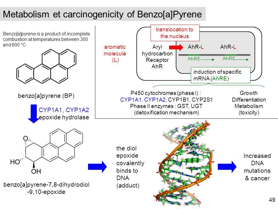 benzo[a]pyrene (BP) Metabolism et carcinogenicity of Benzo[a]Pyrene benzo[a]pyrene-7,8-dihydrodiol -9,10-epoxide CYP1A1, CYP1A2 epoxide hydrolase the