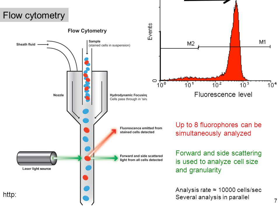 Flow cytometry Up to 8 fluorophores can be simultaneously analyzed http://www.abcam.com/ Fluorescence level Forward and side scattering is used to ana