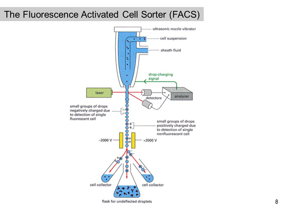 The Fluorescence Activated Cell Sorter (FACS) 8