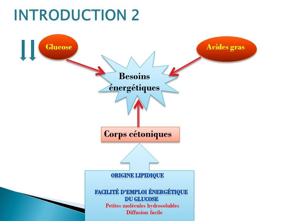 INTRODUCTION 2 Besoins énergétiques GlucoseAcides gras Corps cétoniques