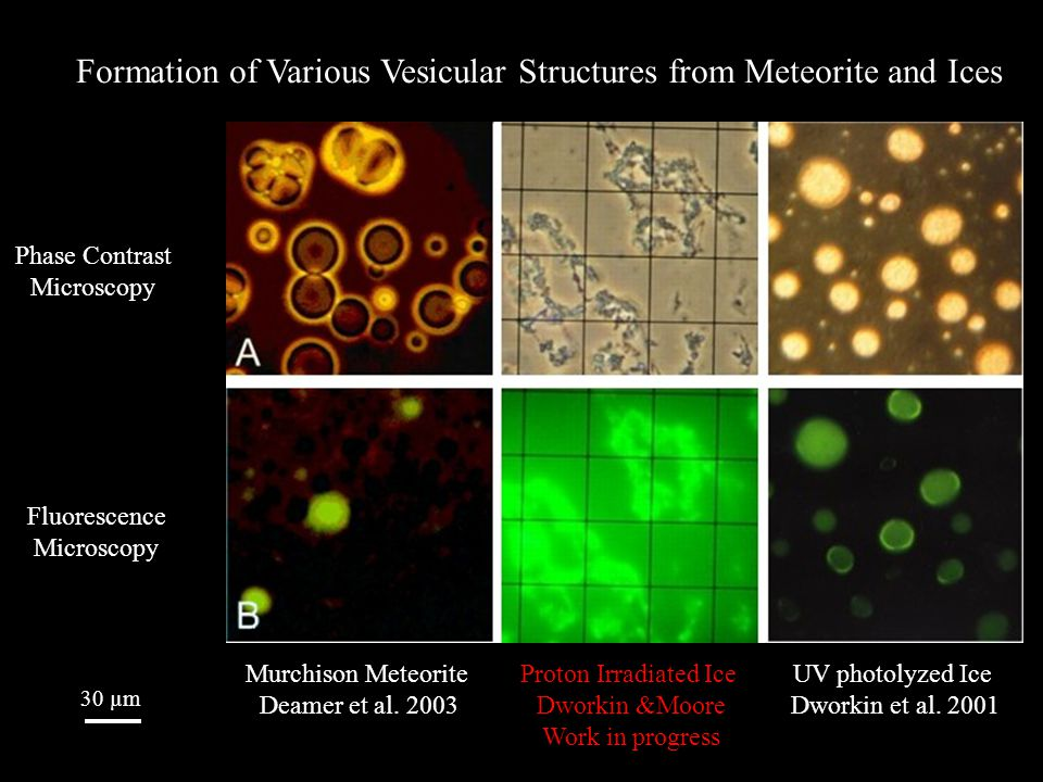 Phase Contrast Microscopy Fluorescence Microscopy 30 µm Murchison Meteorite Deamer et al. 2003 Proton Irradiated Ice Dworkin &Moore Work in progress U