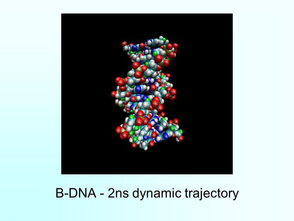 B-DNA - 2ns dynamic trajectory