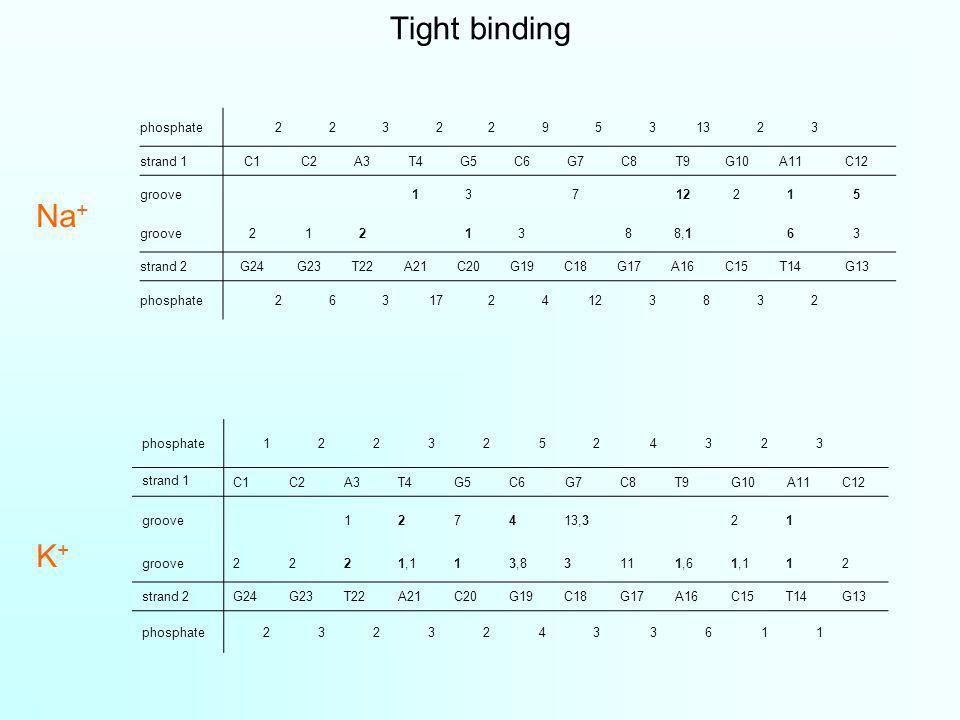 Tight binding phosphate223229531323 strand 1C1C2A3T4G5C6G7C8T9G10A11C12 groove13712215 groove2121388,163 strand 2G24G23T22A21C20G19C18G17A16C15T14G13 phosphate2631724123832 phosphate12232524323 strand 1 C1C2A3T4G5C6G7C8T9G10A11C12 groove127413,321 groove2221,113,83111,61,112 strand 2G24G23T22A21C20G19C18G17A16C15T14G13 phosphate23232433611 Na + K+K+