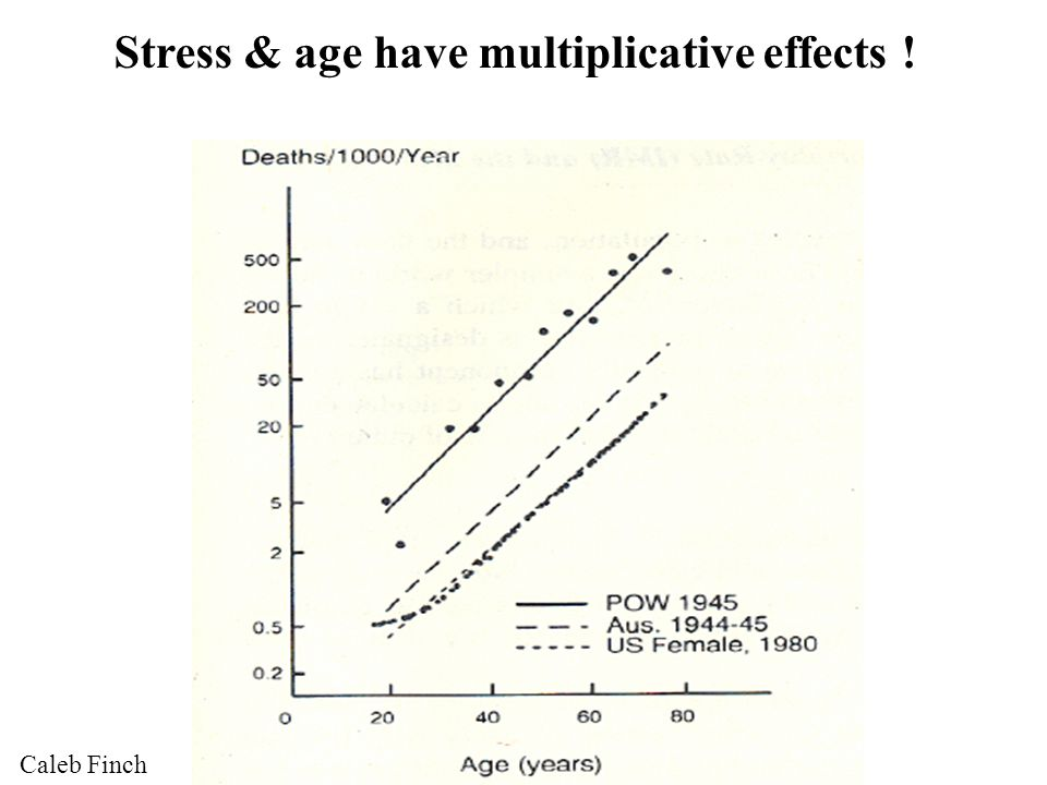 Stress & age have multiplicative effects ! Caleb Finch