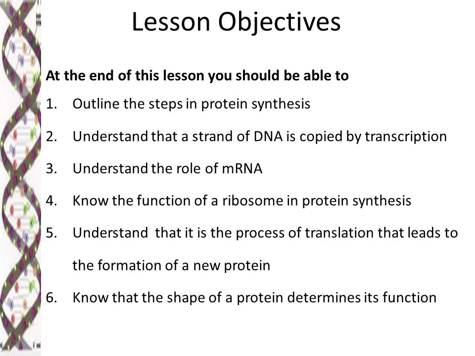 Lesson Objectives At the end of this lesson you should be able to 1.Outline the steps in protein synthesis 2.Understand that a strand of DNA is copied by transcription 3.Understand the role of mRNA 4.Know the function of a ribosome in protein synthesis 5.Understand that it is the process of translation that leads to the formation of a new protein 6.Know that the shape of a protein determines its function