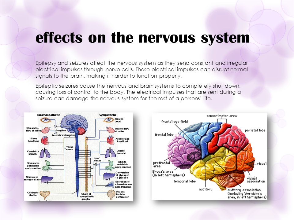 effects on the nervous system Epilepsy and seizures affect the nervous system as they send constant and irregular electrical impulses through nerve cells.