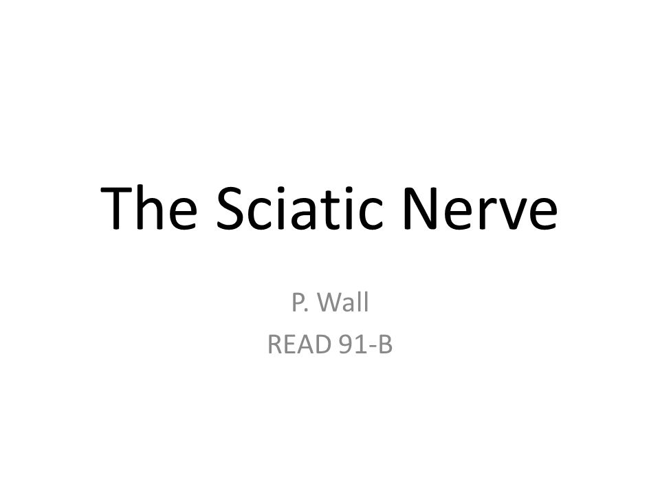 The Sciatic Nerve P. Wall READ 91-B
