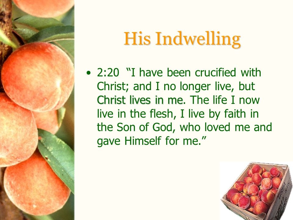 His Indwelling Christ lives in me2:20 I have been crucified with Christ; and I no longer live, but Christ lives in me.