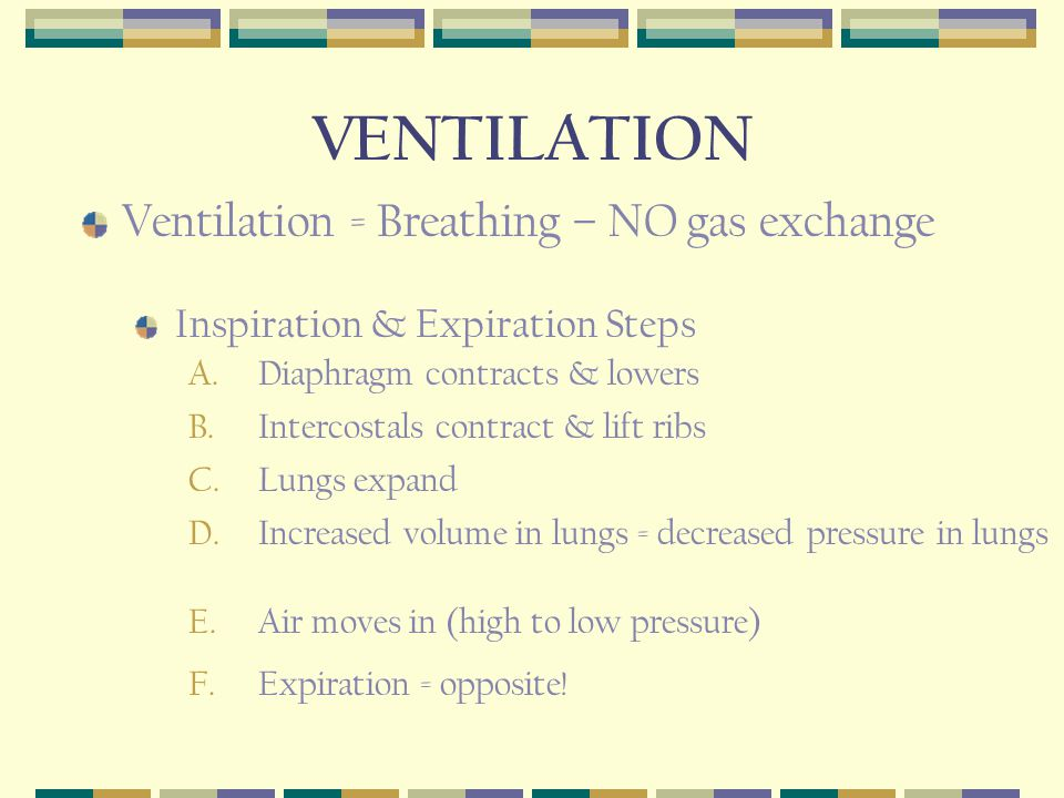 VENTILATION Ventilation = Breathing – NO gas exchange Inspiration & Expiration Steps A.