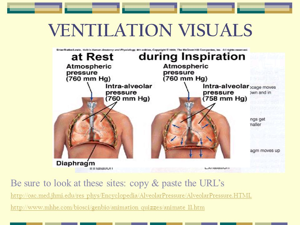 VENTILATION VISUALS     Be sure to look at these sites: copy & paste the URL's