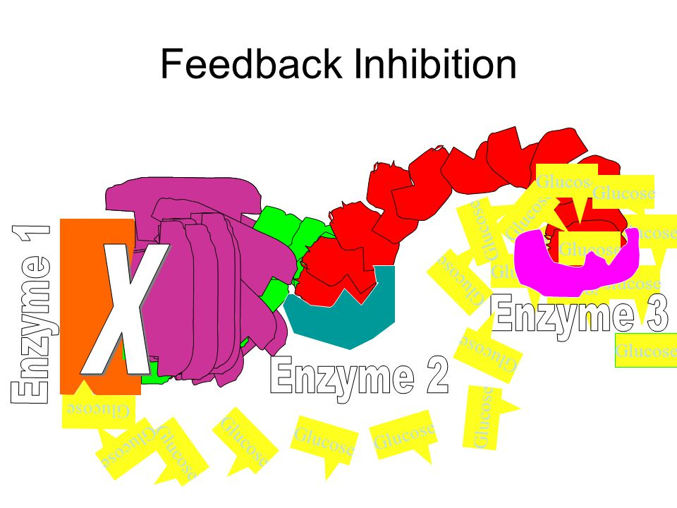 Regulation of Enzyme Activity  FEEDBACK INHIBITION  Stops a metabolic pathway  the product of an metabolic pathway acts as a moderator on an enzyme in the series, thereby altering its shape (active site)  the enzyme cannot combine with the substrate  Once the moderator molecule is removed from the moderator site, the active site snaps back to its original shape.