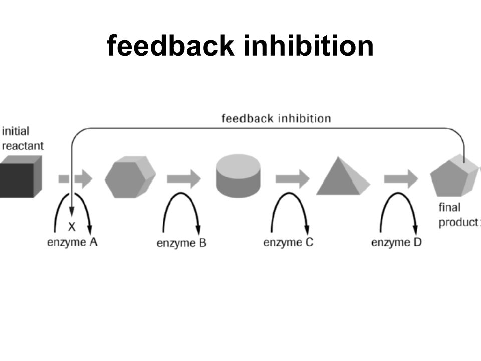 feedback inhibition feedback inhibition the inhibition of an enzyme in a metabolic pathway by the final product of that pathway