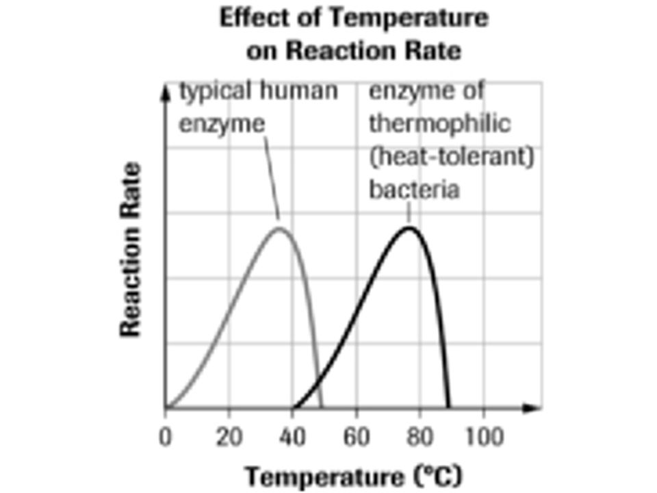 Enzymes have an optimal temperature at which the reaction is fastest.