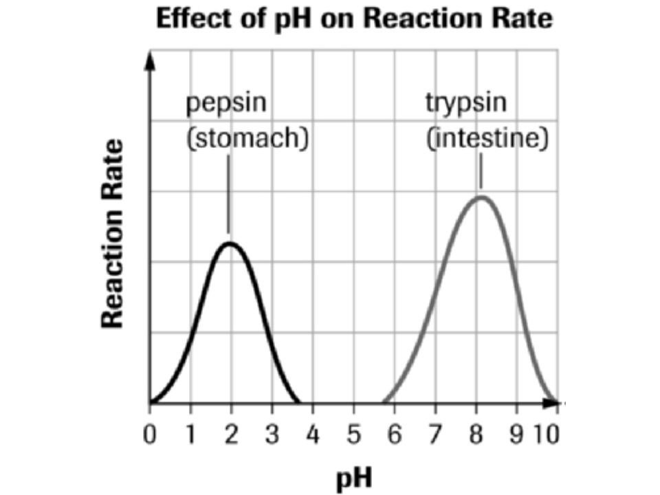 pH  acidity or alkalinity  the lower the number the more acidic  the higher the number the more alkaline  Enzymes have an optimal pH at which the reaction is fastest  Just like with temperature, pH's out of the optimal range will cause a decrease in rate of reaction  shape changes = enzyme denatures.
