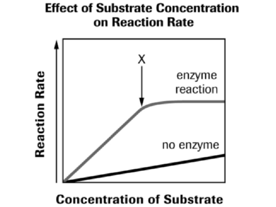 CONCENTRATION  Since molecules must collide for a reaction to occur, it is only logical that the more substrates you have, the greater the chance the enzyme will have of combining and reacting with it.