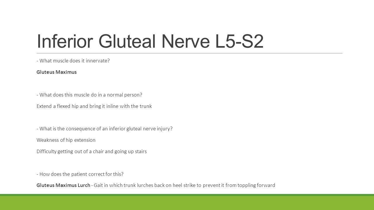 lower limb nerve injuries sammy case and matt vreugde feel to 4 inferior