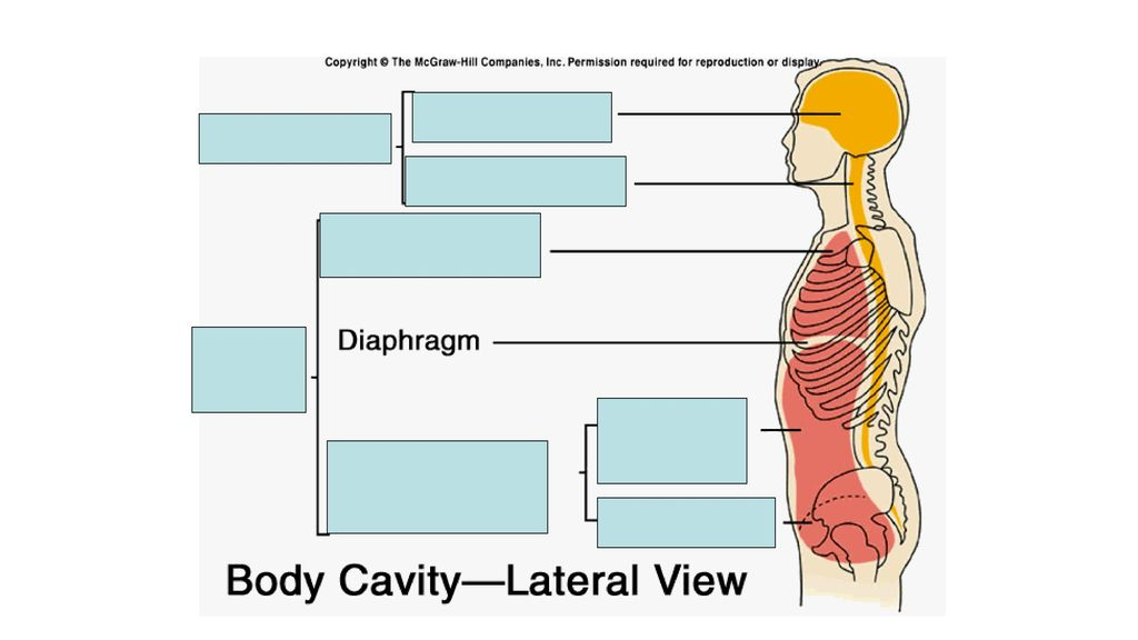 Intro to Anatomy August 11, ppt download