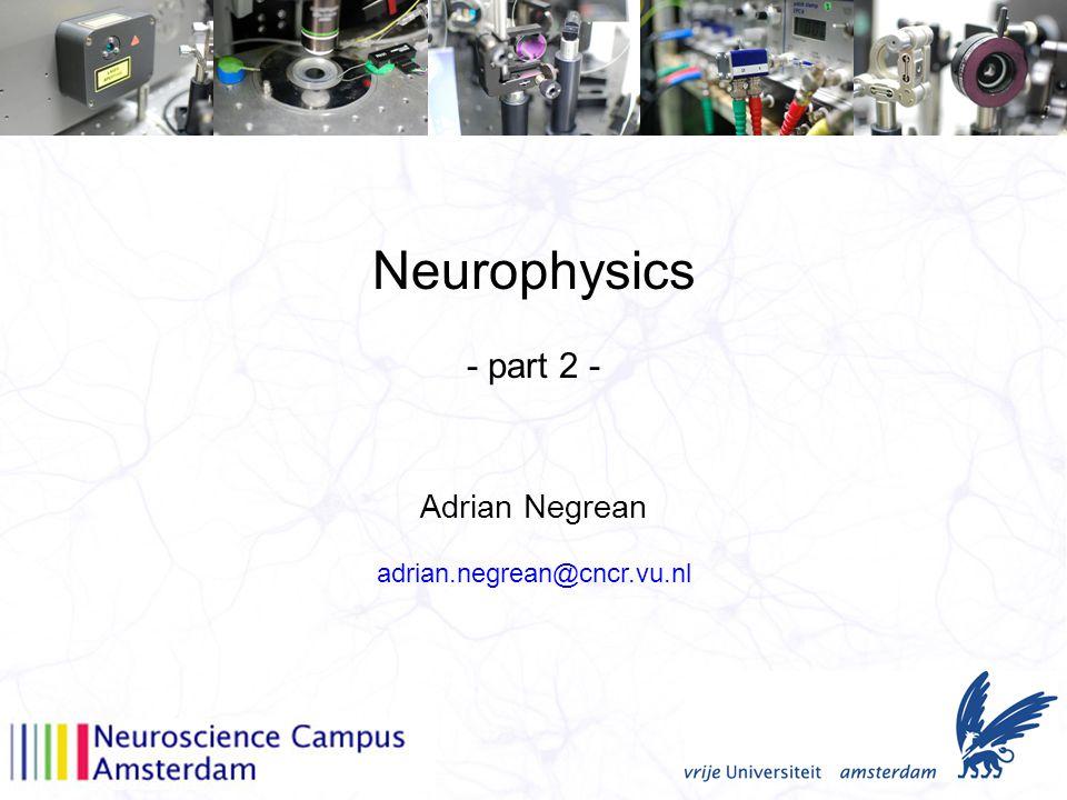 Neurophysics Adrian Negrean - part 2 - adrian.negrean@cncr.vu.nl
