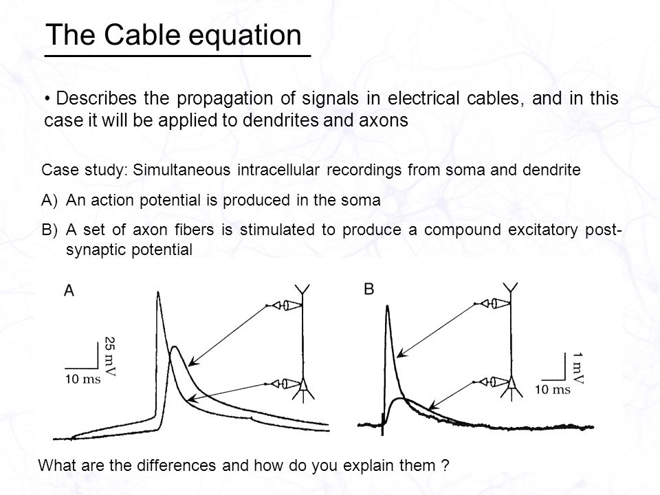 The Cable equation Describes the propagation of signals in electrical cables, and in this case it will be applied to dendrites and axons Case study: Simultaneous intracellular recordings from soma and dendrite A)An action potential is produced in the soma B)A set of axon fibers is stimulated to produce a compound excitatory post- synaptic potential What are the differences and how do you explain them
