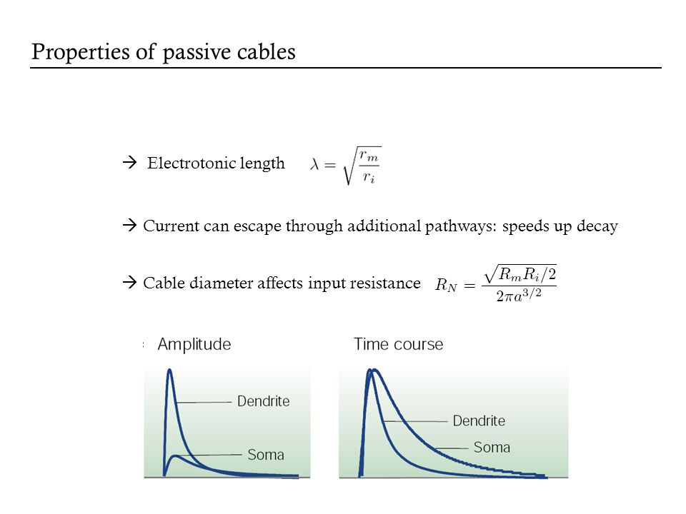 Electrotonic length Current can escape through additional pathways: speeds up decay Cable diameter affects input resistance Properties of passive cabl