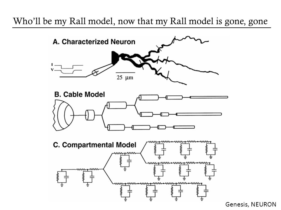 Wholl be my Rall model, now that my Rall model is gone, gone Genesis, NEURON